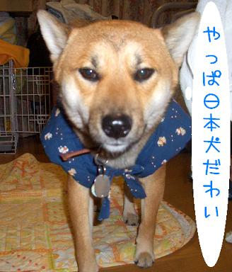 CIMG3896_edited.jpg
