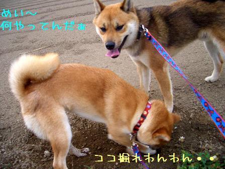 CIMG5933_edited.jpg