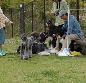 デカ犬の集い