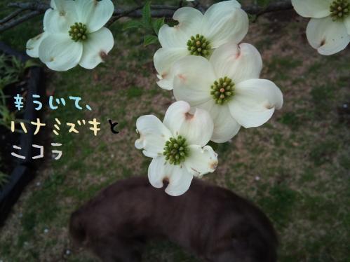 DSC_0120-04-22.jpg
