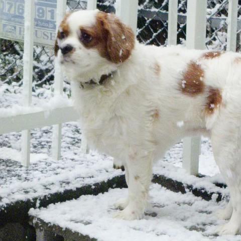 看板犬ココちゃん。雪遊び