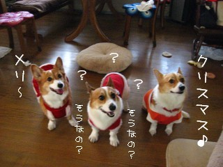 クリスマス!?