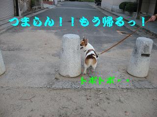20070822220152.jpg