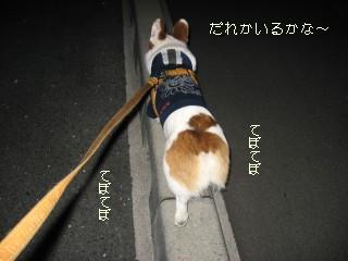 ひとりでお散歩