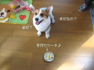まだ食べちゃだめ?