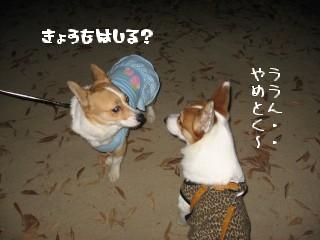 追っかけっこする~?
