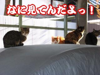 猫さんおそろいで・・・