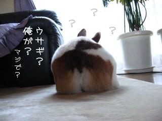 でかウサギ!?