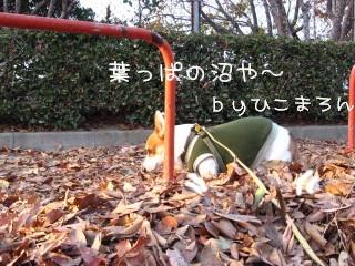 枯れ葉の・・・