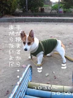 コワイんだよ~?