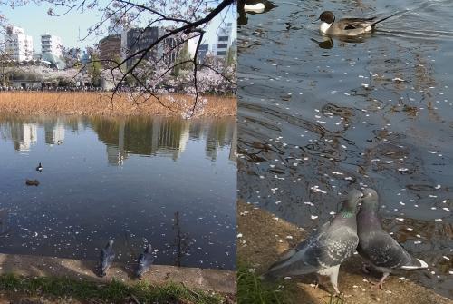 上野公園春の散歩