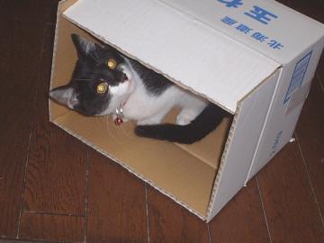 080129箱入り娘d