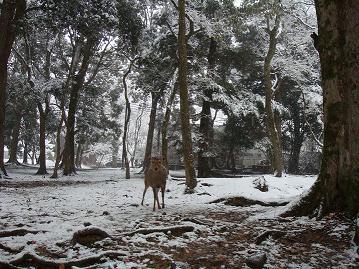 雪の中にも鹿♪