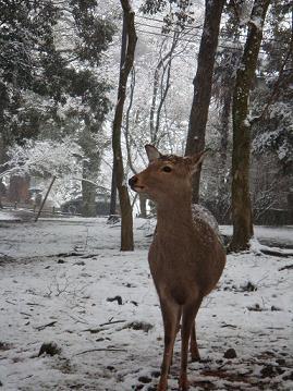 鹿こっちきた!!