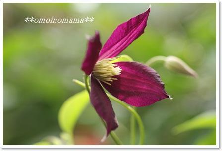 IMG_1159_20110530184033.jpg