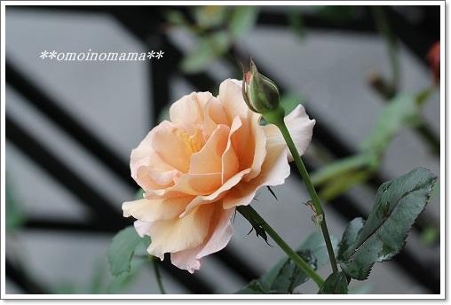 IMG_1592_20110607233540.jpg