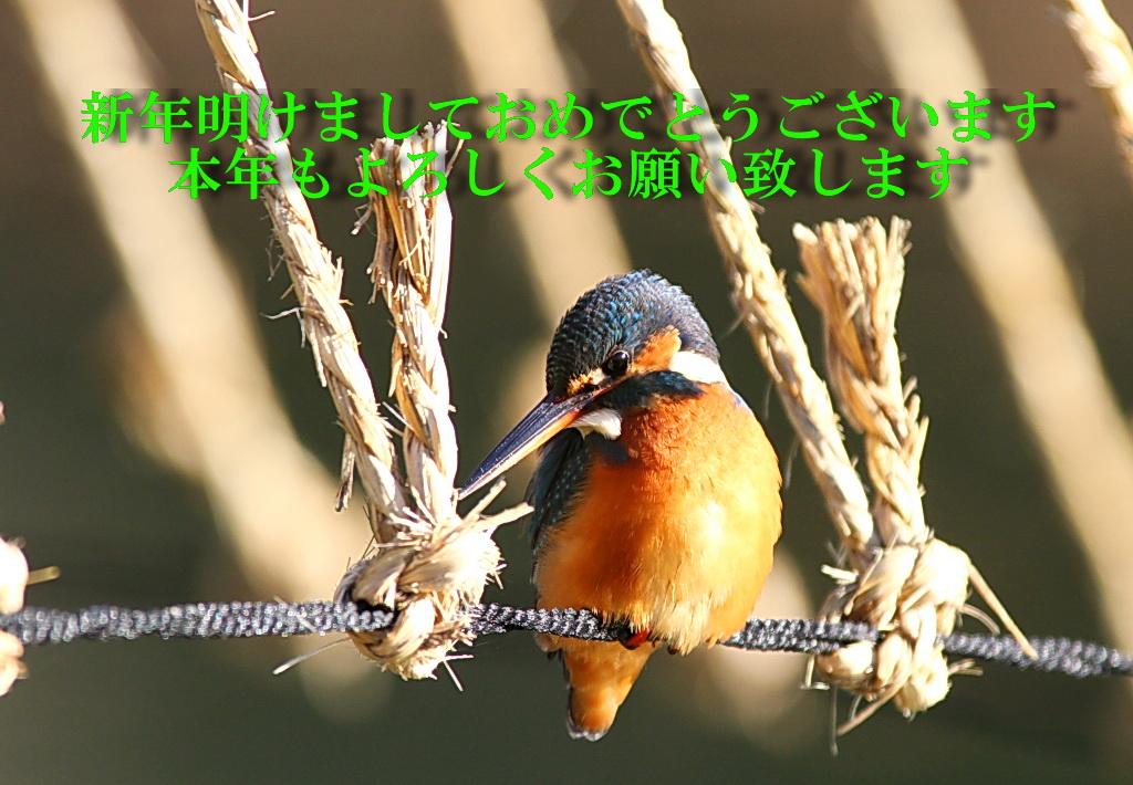 IMG_4459-kawamoji.jpg