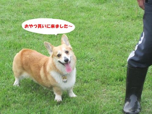 IMG_6133.jpg
