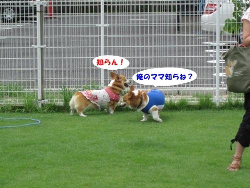 IMG_8350_20110731100623.jpg