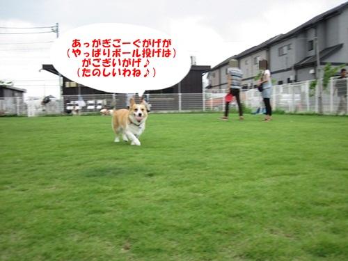 IMG_8418_20110731100440.jpg