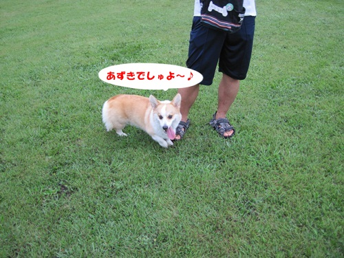 IMG_9395_20110821060110.jpg