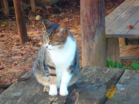 小仏城山の猫
