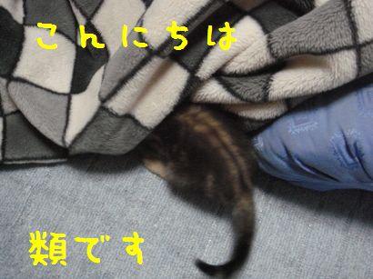 20070524230931.jpg