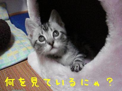 20070524231016.jpg