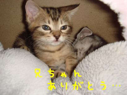 20070525000912.jpg