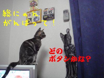 20070805232928.jpg