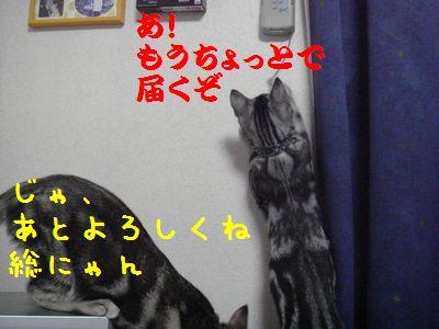 20070805232937.jpg
