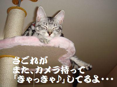 20070811160108.jpg