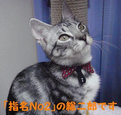 20070811160132.jpg