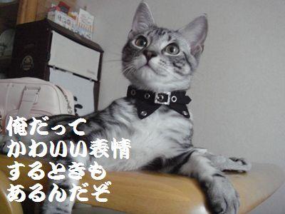20070811160210.jpg