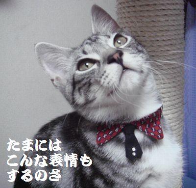 20070811160224.jpg