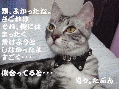 20070811160256.jpg