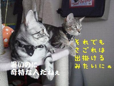 20070818011138.jpg
