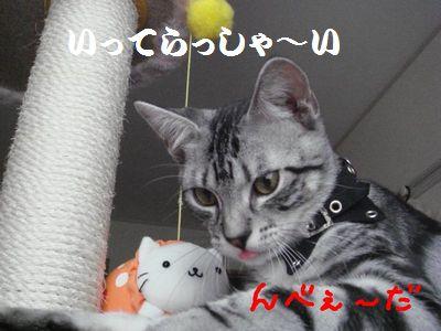 20070818011144.jpg
