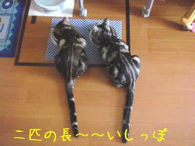 20070902011226.jpg