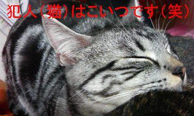 20071106121137.jpg