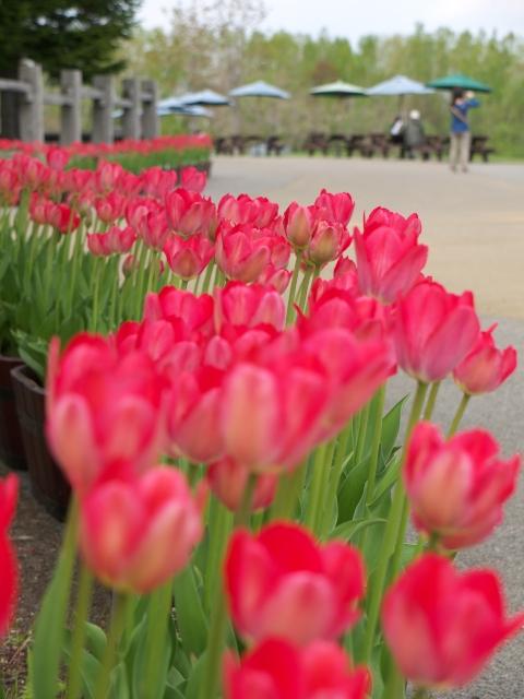 takino-park2011_02t.jpg