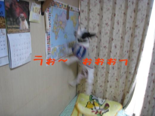 20071116190611.jpg
