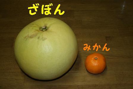 1217-01.jpg