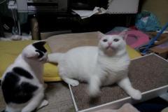 S白若菜3