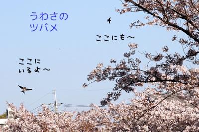 20120414_2541.jpg