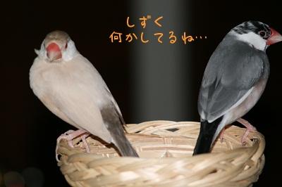 dNnXU1.jpg