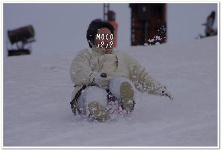 ドッグラン 282