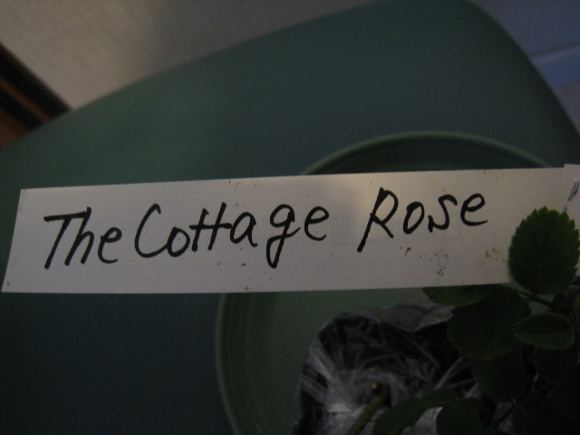 The Cottage Rose2
