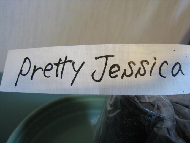 Pretty Jessica2