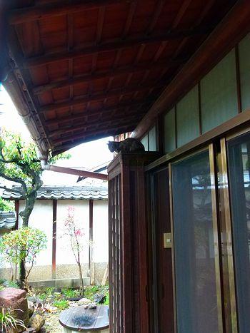 chichibi125.jpg
